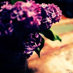 Purple (Ennev) Tags: hipstamatic blankofreedom13film foxylens oggl