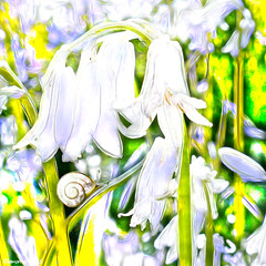 Wedding bells (Lemon~art) Tags: flowers wedding white nature bells flora snail manipulation