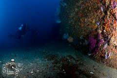 El Cortijo - Peter Ives' Pinnacle (ShaunMYeo) Tags: scubadiving reef gibraltar calpe underwaterphotography  gibilterra ikelite   elcortijo    gibraltr  cebelitark gjibraltar ibraltaro hibraltar xibraltar giobrltar gibraltrs gibraltaras ibilt            peterivespinnacle
