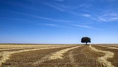 Tierra de Campos (arribamarcos) Tags: espaa verano soledad horizonte palencia castillayleon tierradecampos