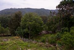 terrenito memo (mariaschivster) Tags: house green casa cabin woods valle paisaje bosque valley vegetation campo lanscape bucolic cabaa buclico casucha cabaita