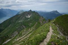 between Schongtsch & Lttgssli (BE) (Toni_V) Tags: alps landscape schweiz switzerland europe brienzersee suisse hiking 28mm rangefinder trail mp alpen svizzera sentiero wanderung wanderweg berneroberland berneseoberland 2016 brienzerrothorn svizra leicam elmaritm brienzergrat messsucher 160708 schongtsch typ240 lttgssli toniv m2400619
