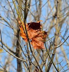 2-FallAtWarriorsPathParkLake (T's PL) Tags: tree leaf nikon fallcolor tn tennessee yabbadabbadoo kingsporttn warriorspathstatepark tamron18270 d5100 tamron18270mmf3563diiivcpzd nikond5100 patrickhenryreservoirontheholstonriver