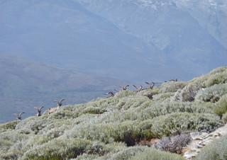 Spain Ibex Hunt & Driven Partridge Hunts 48