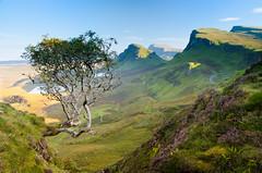 Quiraing Tree (TS-Colors) Tags: nikon d7000 isleofskye skye quiraing mountain moutainscape leefilters leefilter tree scotland uk unitedkingdom landscape tscolors