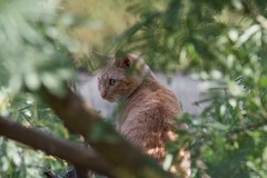 IMG_0262 (Romn Carrin brotons) Tags: gatos rubia trmaticas