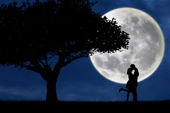 Fotohd.weebly.com/Luna (fotohdteam) Tags: park blue two sky woman moon plant black tree male guy art love nature girl beautiful silhouette illustration lune happy person evening design twilight hug kiss couple honeymoon friendship affection outdoor blu background computergenerated young happiness husband valentine romance luna full relationship together card passion wife romantic hd nightscene recreation date lover adoration valentinecard rossa lunarossa anni69
