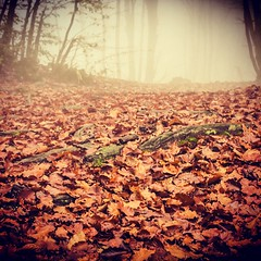 Autumn in love (beba141090) Tags: life november autumn love leaves fog season kiss waiting novembre seasons wildlife dream dreaming strong nebbia autunno redleaves firstkiss faiallo autumnlovers