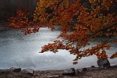 Ara si, la tardor (Albert T M) Tags: autumn naturaleza automne árboles natura pantano catalonia arbres otoño catalunya outono tardor montseny catalogne pantà parcnatural udazkena autumne seronda santafedelmontseny aŭtuno rerevera