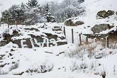 Eira A44 Ceredigion. Snowy scenes in Ceredigion, mid Wales. (www.atgof.co) Tags: winter red snow rock elvis craig 80 ceredigion eira gaeaf eisteddfa gurig