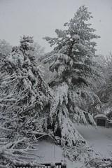 Wet snow on Monday (durand clark) Tags: kentucky firstsnow wetsnow ftthomasky nikond700