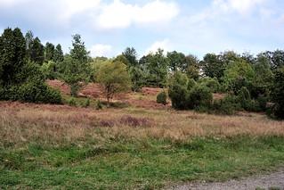 Een mooi en rustig plekje tussen Wilsede en de Wilseder Berg.