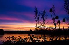 Teasles and sunrise snow clouds (SimonLea2012) Tags: winter light sky lake colour pool silhouette sunrise beautifullight naturereserve snowclouds rspb teasles abigfave rspbnaturereserve forgemilllake coldsnaps