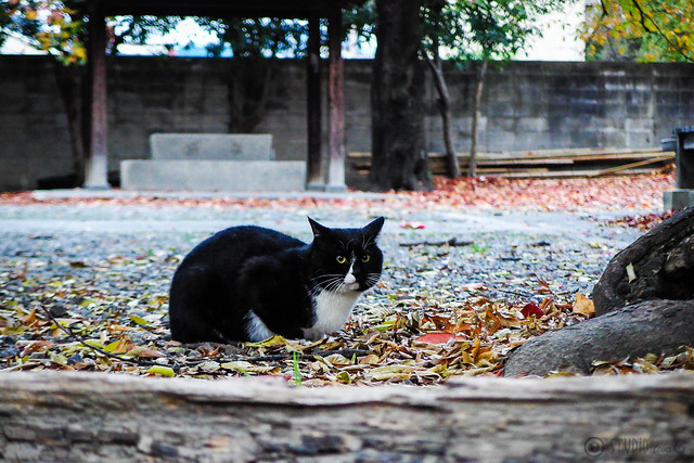 Today's Cat@2014-11-20