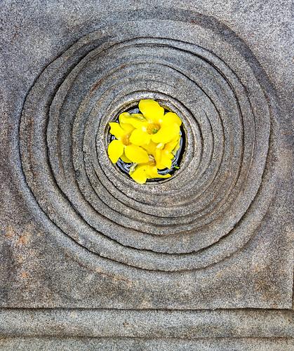 Puja Flowers