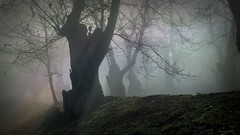 castaos en la niebla (mfernanl) Tags: fog landscape photography photo foto paisaje pointofview fotografia niebla castaos compact compactcamera miguelfernandez puntodevista compacta camaracompacta mfernanl miguelfernandezfotografia miguelfernandezimagenes