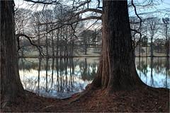 Pinetum Lake (ioensis) Tags: winter lake nature gray bald reserve mo missouri shore summit cypress shaw pinetum jdl ioensis 92182007067tmf1b
