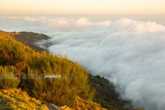Above the clouds (arturii!) Tags: above light sunset sea sky mountain nature clouds landscape europe top horizon peak catalonia valley summit vegetation montseny golde