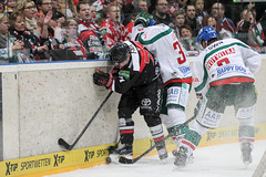 """DEL15 Kšlner Haie vs. Augsburg Panthers • <a style=""""font-size:0.8em;"""" href=""""http://www.flickr.com/photos/64442770@N03/16114722728/"""" target=""""_blank"""">View on Flickr</a>"""