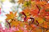 autumn in Kyoto (Ute Kluge) Tags: kyoto obaiin daikotuji kitoin kitojin