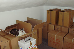 Moving-cat story (4) ( dieffe) Tags: animal animale animali box bote caja cat chat dmenagement gato gatti gatto move mudanza relocation removal scatola scatole trasloco moncalieri piemonte italia