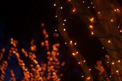 IMG_8509 (springday) Tags: christmas xmas nightphotography family night canon garden fun 50mm prime lights virginia dof creative richmond lakeside christmaslights depthoffield f18 rva gardenoflights tackylights springday dayspring guidedtour henrico xmaspresent lewisginterbotanicalgardens 40d dayspringcreations