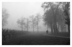 Retina in the fog #3 (Italian Film Photography) Tags: film fog alberi landscape woods kodak 200 retina 1b fomapan nebia