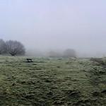 Frosty Hampstead Heath
