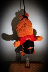 AD8A7959_au_g (thebiblioholic) Tags: bear upsidedown ninja honey pooh 365 nationalday flickrfriday tumblr