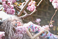 Blooming rush (UMBRA-GULABA (Instagram: umbra_gulaba)) Tags: pink flowers colors beauty portraits garden cherry photography spring dolls bokeh sakura cherrytree balljointeddoll dollphotography bokehlicious angellstudio