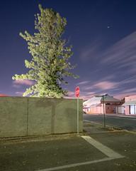 Stop on Eliza (Andrew_Dempster) Tags: longexposure nightphotography urban pinetree night nightscape nightshot au australia stopsign sa southaustralia rosepark