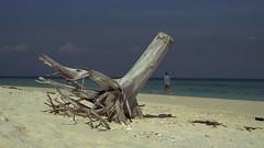 Tree on Beach in Siam (Steve.frog) Tags: india tree beach nature thailand asia asien kerala thai pushkar siam isle indien backwaters rajastan
