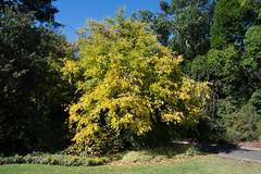 DSC_5069 (Scottmh) Tags: gardens nikon royal australia melbourne victoria botanic d7100