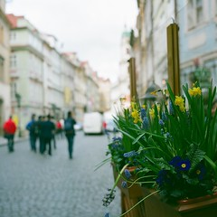 Prague (Saori_) Tags: flower film rolleiflex czech prague praha