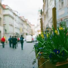Prague (Saori_) Tags: flower film rolleiflex czech prague praha