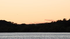 Daybreak at the waterfront (Merrillie) Tags: trees sea seascape nature water silhouette sunrise landscape outdoors photography dawn bay nikon scenery australia nsw newsouthwales centralcoast daybreak waterscape woywoy d5500 nswcentralcoast centralcoastnsw