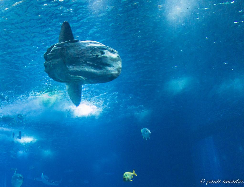 Swasser aquarium fische aquarium fisch im blauen wasser u for Goldfisch rassen