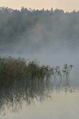 _DSC2886-(2) (Marcin Wytrzyszczewski) Tags: mist lake water fog sunrise landscape scenic poland landscapesdreams nikonflickraward