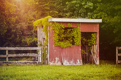 Old Shed in the Woods (hwgphotography07) Tags: wood old trees sunset red sky green abandoned nature grass leaves clouds vintage landscape outdoors country shed falling apart gren