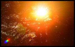 Sunset II (Josh Rokman) Tags: sunset sky nikond7000 orange red nature outdoors tree treesun sun brightsun