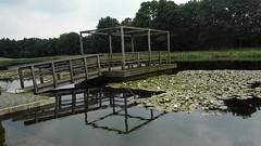 Floriade terrein (anita.snellen) Tags: reflection pond venlo brug floriade vijver reflectie grubbenvorst