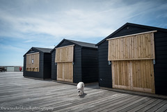 On the pier (www.chriskench.photography) Tags: england dog seaside unitedkingdom huts gb coolpix hastings eastsussex kenchie wwwchriskenchphotography