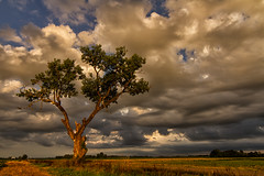 Lone tree at sunset (bmwrider) Tags: sunset tree nature clouds arkansas arkansasriver treesubject