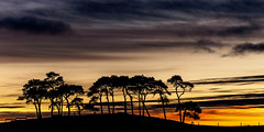 Those Trees! (Highlandscape) Tags: trees sunset sky silhouette clouds landscape scotland highlands hill olympus nairn e5 pooltown