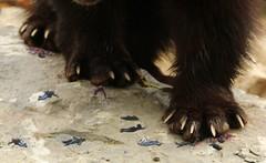 1470 (Jasper Kyodaina) Tags: man guy feet giant paw squish sole stomp crush giantess trample