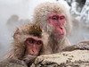 Merry Christmas from the snow monkeys! (c_c_clason) Tags: leica snow japan digilux2 onsen nagano shigakogen jigokudani naganoprefecture snowmonkey japanesemacaque leicadigilux japanesemacaques