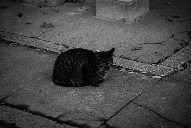 Today's Cat@2014-12-27