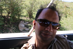 IMG_1986 (gsurya) Tags: kenya cheetah masaimara