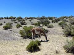 Puerto Madryn-57