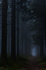 chemin ténébreux (photopierrot44) Tags: nikon foret arbre chemin brume ambiance d610 ténébreux